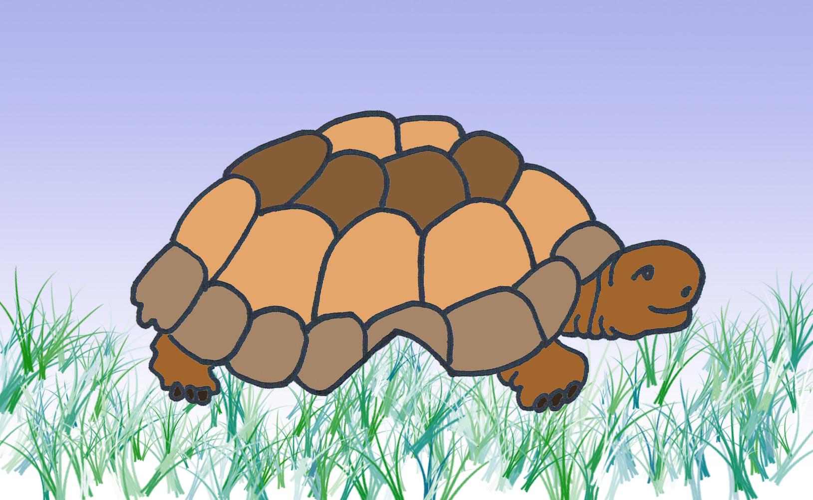 La tortuga que se perdió | Club Perlita