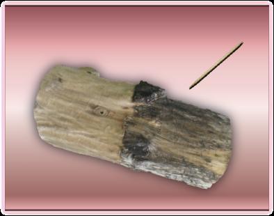 tronco y palillo
