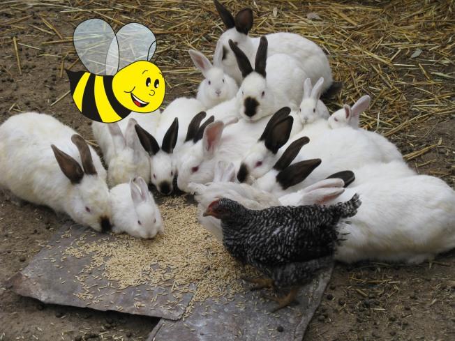 abejita con conejos