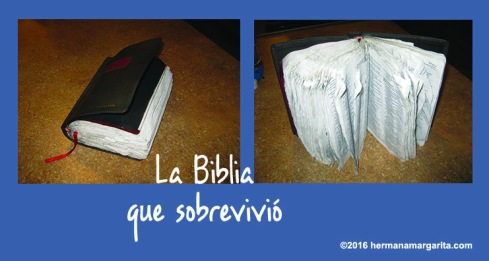 biblia-que-sobrevivio