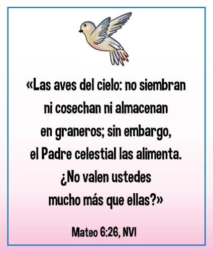 mateo-6_26
